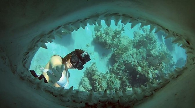 go pro shark riders